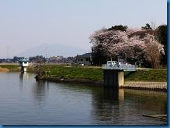 福岡堰の桜@茨城県つくばみらい市