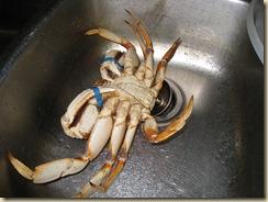 crabby 010